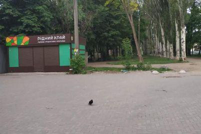 v-zaporozhe-demontirovali-nezakonnyj-maf.jpg