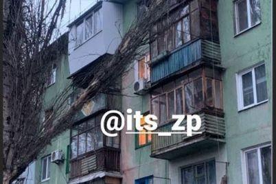v-zaporozhe-derevo-ruhnulo-na-balkon-mnogoetazhnogo-doma-foto.jpg