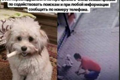 v-zaporozhe-kamera-videonablyudeniya-zapechatlela-pohititelya-domashnih-zhivotnyh-foto.jpg