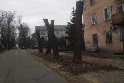 v-zaporozhe-kronirovali-derevya-pochti-pod-koren-foto.jpg