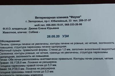 v-zaporozhe-muzhchina-vykinul-sobaku-s-tretego-etazha-foto.jpg