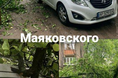 v-zaporozhe-na-avto-upalo-derevo-foto.jpg