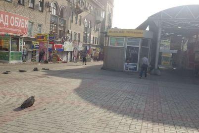 v-zaporozhe-na-czentralnom-rynke-demontirovali-20-nezakonnyh-pavilonov-foto.jpg