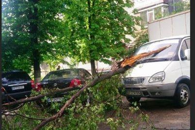 v-zaporozhe-na-gruzovoj-avtomobil-upalo-derevo-foto.jpg