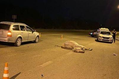 v-zaporozhe-na-horticze-kon-pogib-pod-kolesami-avto.jpg