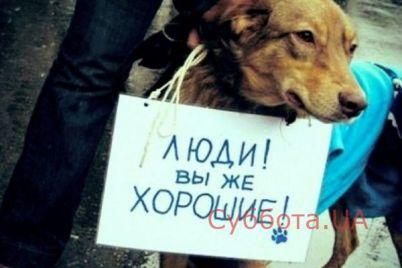v-zaporozhe-na-hozyaina-sobaki-kotoraya-ubivaet-bezdomnyh-zhivotnyh-bylo-zavedeno-ugolovnoe-delo.jpg