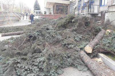 v-zaporozhe-na-mayakovskogo-nezakonno-srubili-ogromnye-eli-foto.jpg