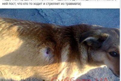 v-zaporozhe-neizvestnyj-muzhchina-uprazhnyaetsya-v-strelbe-iz-travmaticheskogo-oruzhiya-na-dvorovyh-sobakah-foto.jpg