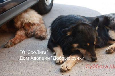 v-zaporozhe-pes-ohranyal-postradavshuyu-v-dtp-sobaku-i-privel-k-nej-volonterov.jpg