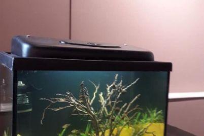 v-zaporozhe-pokazali-risunki-vossozdannye-v-akvariumah-s-vodoj.jpg