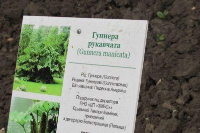 v-zaporozhe-posadili-redkoe-ekzoticheskoe-rastenie-foto.jpg