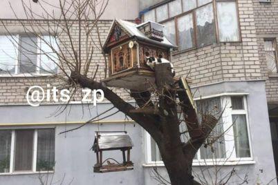 v-zaporozhe-poyavilas-koshachya-rezidencziya-na-dereve-foto.jpg
