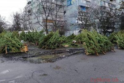 v-zaporozhe-poyavilos-zelenoe-kladbishhe-foto-video.jpg