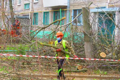 v-zaporozhe-prodolzhayut-massovo-udalyat-derevya-foto.jpg