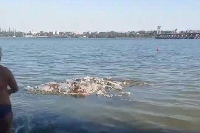 v-zaporozhe-v-dnepre-obrazovalsya-musornyj-ostrov-video.jpg
