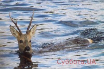 v-zaporozhe-v-reke-zametili-dvuh-rogatyh-osobej-video.jpg