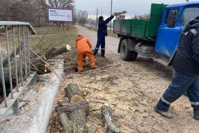 v-zaporozhe-vozle-parka-ruhnulo-derevo-foto.jpg