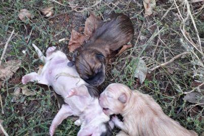 v-zaporozhe-vybrosili-treh-novorozhdennyh-shhenkov-nedaleko-ot-gimnazii-video.jpg