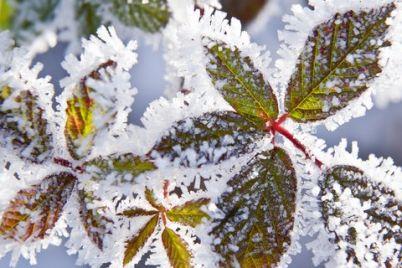 v-zaporozhe-vypal-pervyj-sneg-fotofakt.jpg