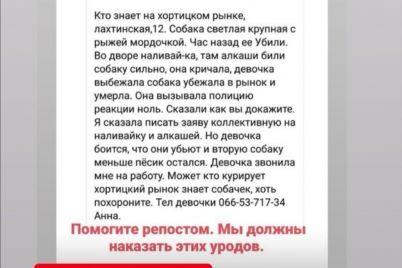 v-zaporozhe-zavsegdatai-nalivajki-ubili-sobaku-pryamo-pod-oknami-rajotdela.jpg