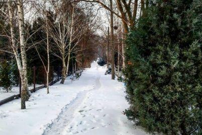 v-zaporozhskij-botsad-prishla-snezhnaya-skazka-foto.jpg
