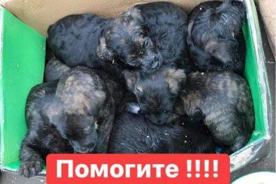 v-zaporozhskij-priyut-podbrosili-malyshej-neobhodima-pomoshh.jpg