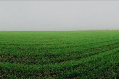 v-zaporozhskoj-oblasti-40-gromad-poluchili-v-kommunalnuyu-sobstvennost-zemlyu.jpg