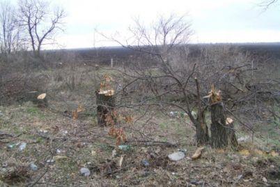v-zaporozhskoj-oblasti-beznakazanno-unichtozhali-lesopolosy-video.jpg