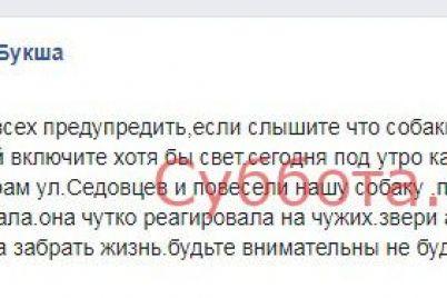 v-zaporozhskoj-oblasti-hozyaeva-nashli-svoyu-sobaku-zhestoko-ubitoj.jpg