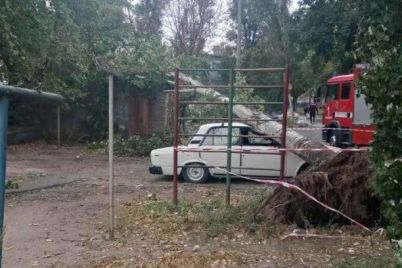 v-zaporozhskoj-oblasti-iz-za-nepogody-padali-avarijnye-derevya-foto.jpg