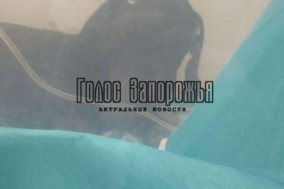 v-zaporozhskoj-oblasti-izverg-s-osoboj-zhestokostyu-ubivaet-chuzhih-domashnih-zhivotnyh-foto.jpg