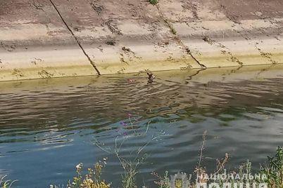v-zaporozhskoj-oblasti-kosulya-upala-v-orositelnyj-kanal-pytayas-priblizitsya-k-vode-ee-spasli-policzejskie.jpg