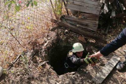 v-zaporozhskoj-oblasti-kotenok-upal-v-glubokij-kolodecz-vyzvali-spasatelej.jpg