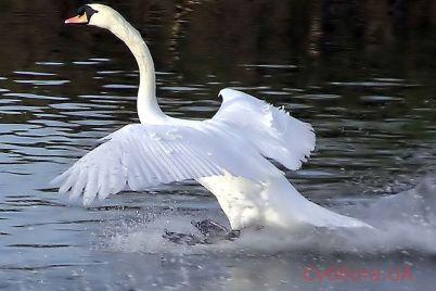 v-zaporozhskoj-oblasti-krasivye-pticzy-vyhodyat-na-progulku-s-lyudmi-video.jpg