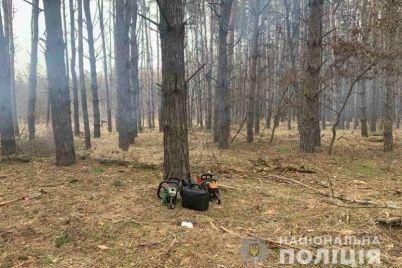 v-zaporozhskoj-oblasti-lesnye-brakonery-rubili-sosny-foto.jpg