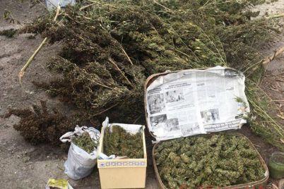v-zaporozhskoj-oblasti-mestnyj-zhitel-hranil-u-sebya-doma-kilogrammy-narkotikov-foto.jpg