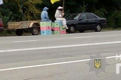 v-zaporozhskoj-oblasti-na-akcziyu-protesta-vyshli-lyudi-v-odezhde-pchelovodov-foto.jpg