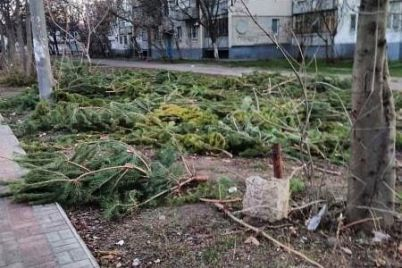 v-zaporozhskoj-oblasti-neprodannym-elkam-nashli-neozhidannoe-primenenie.jpg