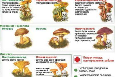 v-zaporozhskoj-oblasti-podrostki-okazalis-v-bolnicze-posle-poedaniya-gribov.jpg