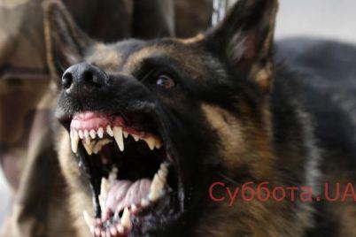 v-zaporozhskoj-oblasti-pojmali-opasnuyu-dlya-obshhestva-ovcharku.jpg