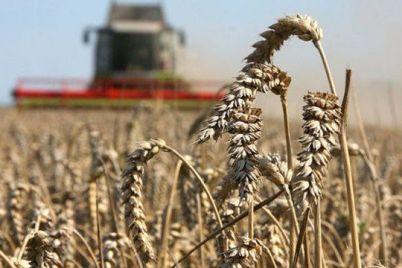 v-zaporozhskoj-oblasti-prodolzhaetsya-posevnaya-kampaniya-agrarii-zasadili-pochti-80-zernovyh.jpg