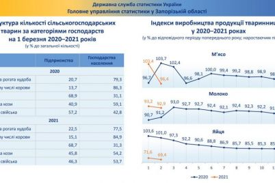v-zaporozhskoj-oblasti-rekordno-upalo-proizvodstvo-yaicz-kakaya-situacziya-s-myasom-i-molokom.jpg