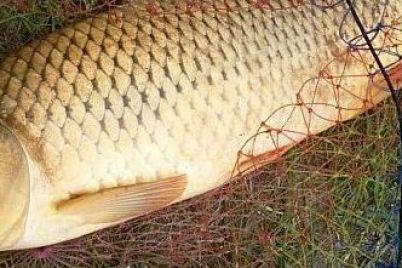 v-zaporozhskoj-oblasti-rybak-ubival-rybu-tokom.jpg