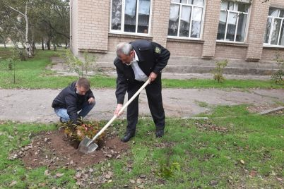 v-zaporozhskoj-oblasti-shkolniki-vnesli-svoj-vklad-v-posadku-milliona-derevev.jpg