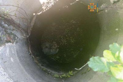 v-zaporozhskoj-oblasti-sobaka-upala-v-kanalizaczionnyj-kolodecz.jpg