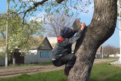 v-zaporozhskoj-oblasti-sportivnym-snaryadom-dlya-selskih-detej-stala-staraya-grusha-video.png