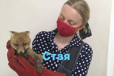 v-zaporozhskoj-oblasti-troe-lisyat-popali-v-kapkan-odin-pogib-drugih-spasaet-zoozashhitnicza-foto.jpg