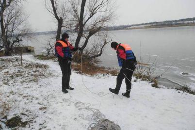 v-zaporozhskoj-oblasti-v-silnyj-moroz-lebedi-nuzhdayutsya-v-pomoshhi.jpg