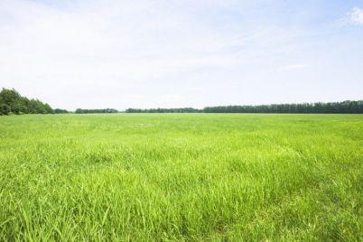 v-zaporozhskoj-oblasti-v-sobstvennost-gosudarstva-vernuli-kurgan-stoimostyu-12-millionov-griven.jpg