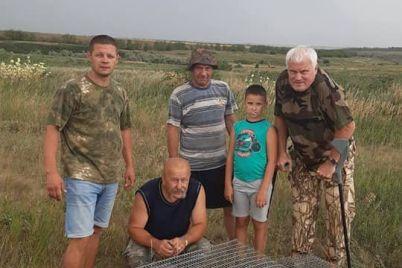 v-zaporozhskoj-oblasti-v-step-vypustili-11-surkov-video.jpg